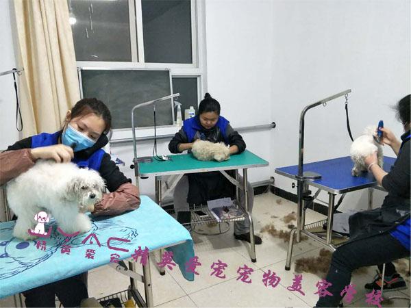 宠物美容师有学历要求吗