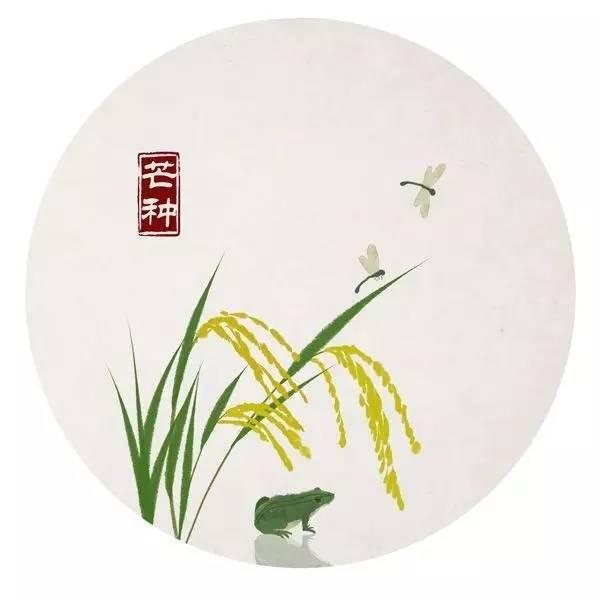 中华传统文化 24节气之芒种