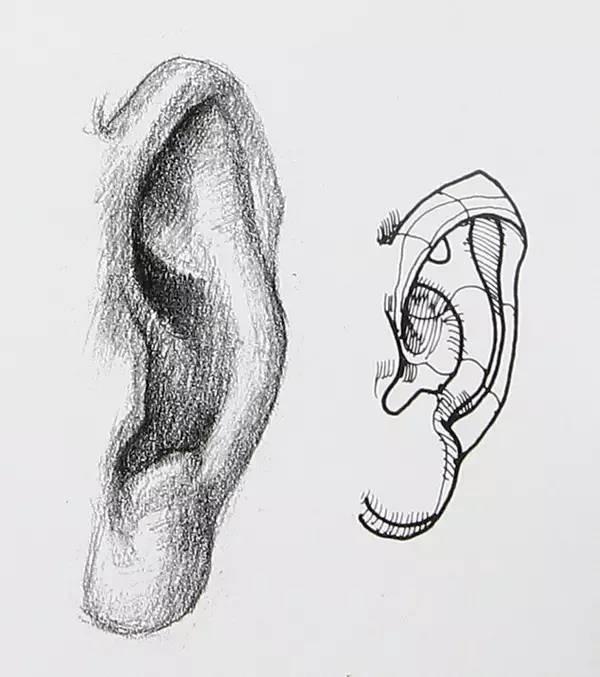 素描人物丨嘴巴 耳朵画法详解图片