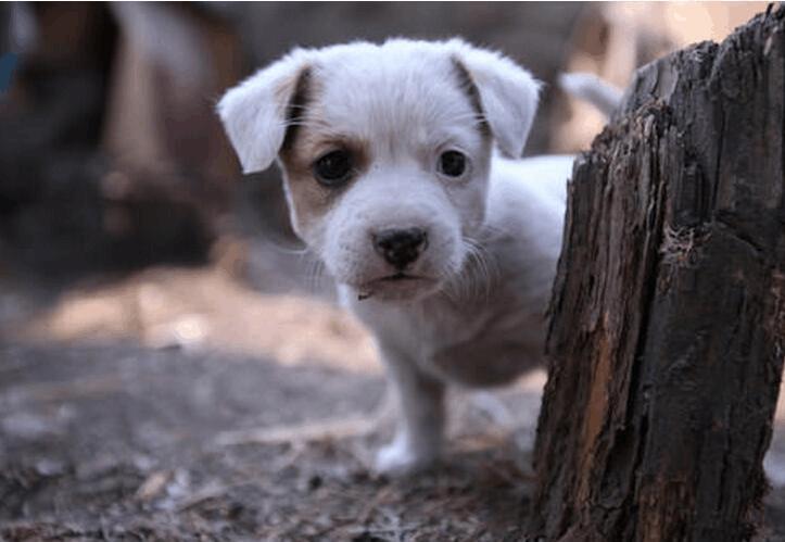 流浪狗最终的归宿在哪里?带你看流浪狗真正的生活