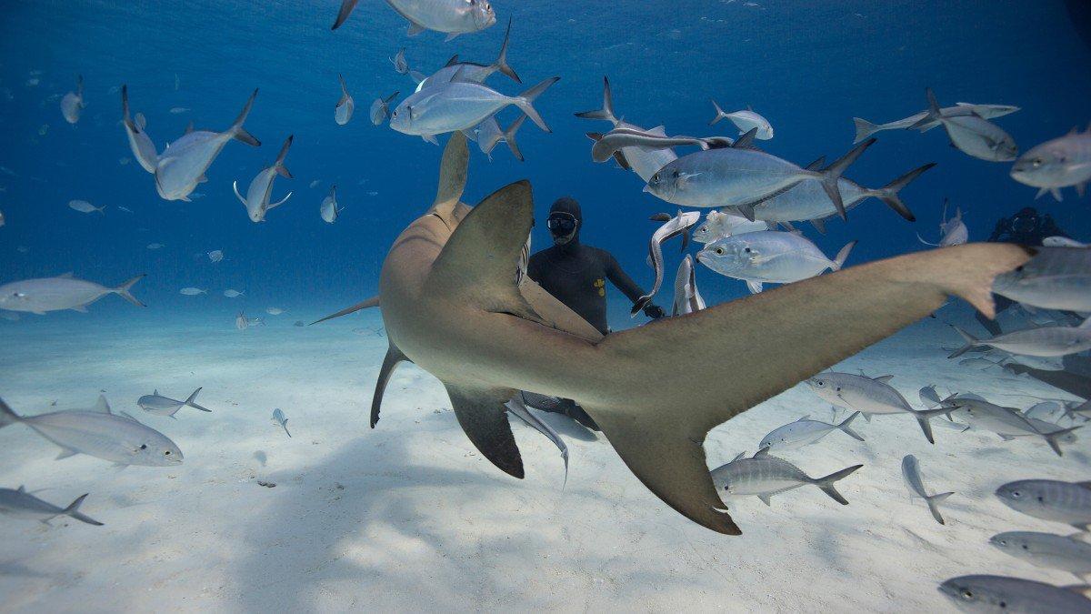 比基尼加鲨鱼,99%人没见过的极致性感