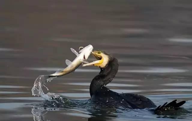 推荐丨我是一条鱼,我要逆流而上