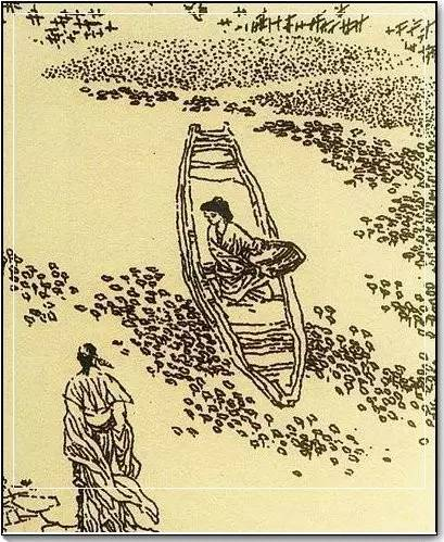 草木如织荇菜:水环境的标识物