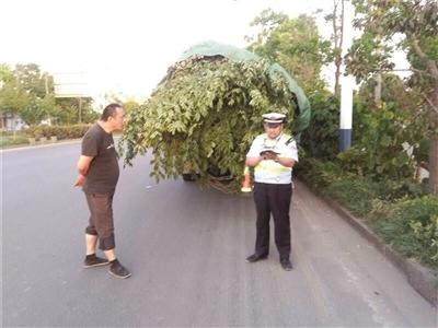 """树木遮挡号牌被查司机竟笑称""""正常""""(图)"""