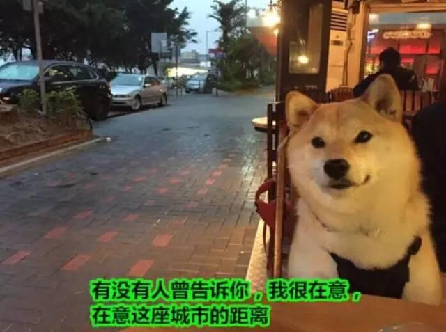 靖边本地婚恋交友上线了,等你来约...靖边的单身狗赶紧进来!