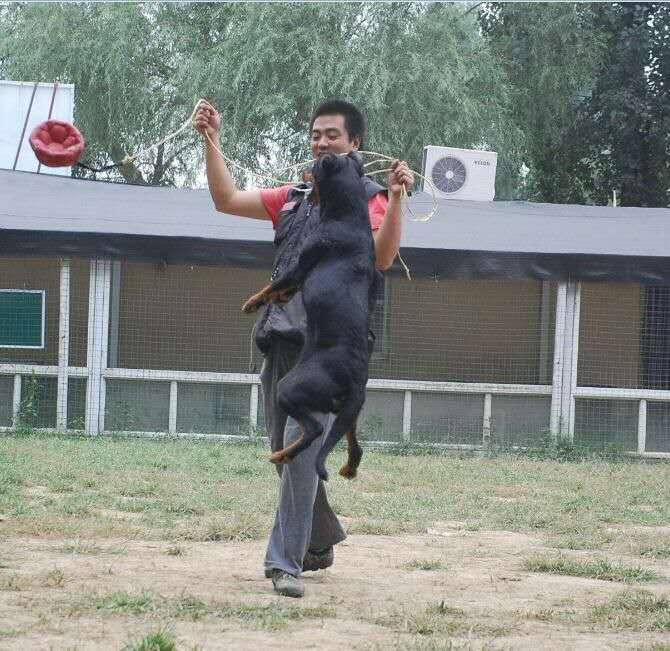 【北京蒂梵犬舍】您爱犬最好的地方