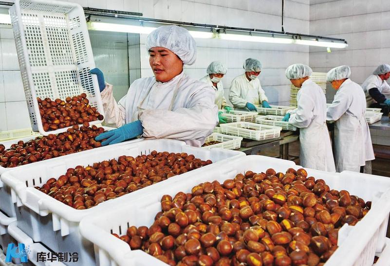 水果保鲜冷库建设用于贮藏板栗时如何防止烂果