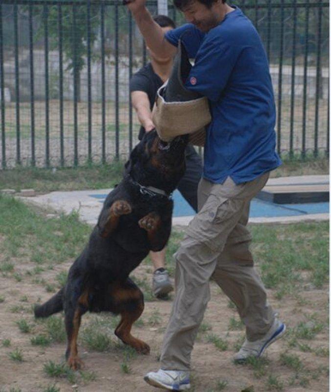 【北京蒂梵犬舍】带给你最好的狗狗