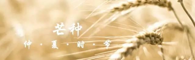 芒种丨水国芒种后,梅天风雨凉