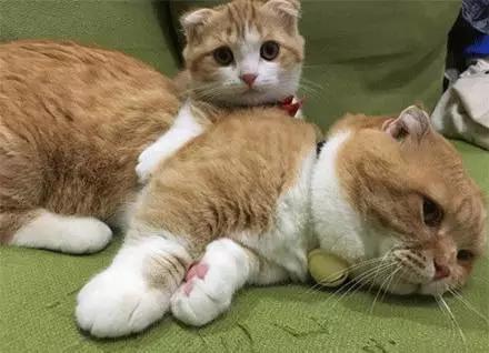 短腿猫爸的育女经,心好累为什么小孩这么难带