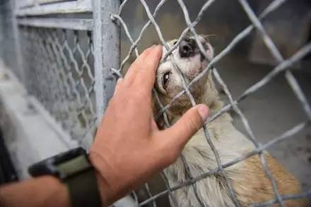 一只垂头丧气的老年狗狗坐在角落郁郁寡欢,当它被人摸时露出的幸福表情让人难过.....