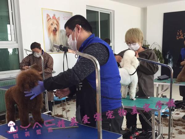 c级宠物美容师找工作工资多少