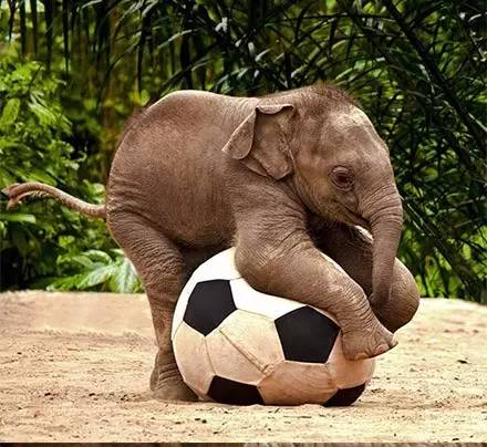 幸福的小象们,希望它们能不被伤害,快乐的活着