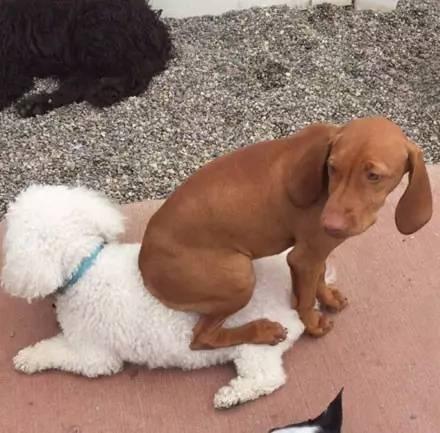一只称霸宠物寄养中心的大黄狗,它的技能竟然是....