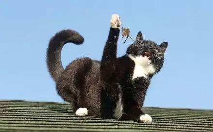 网友偶然拍到的家里猫调戏小老鼠的全过程,竟有些心疼老鼠.