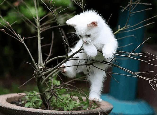 晒宠物合集,汇集不同种类最萌的小可爱