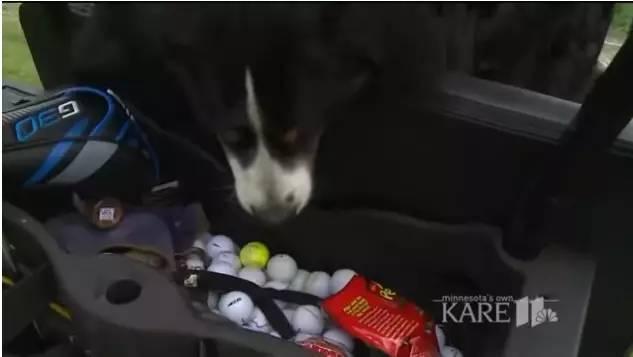 暖|一个热爱捡球的狗子,把捡来的球做起了公益事业!暖心~