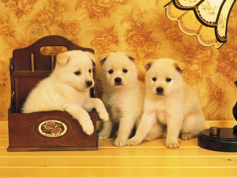 咖巴斯顿宠物粮――狗身上长脓包怎么回事,狗狗身上长脓包了该怎么办