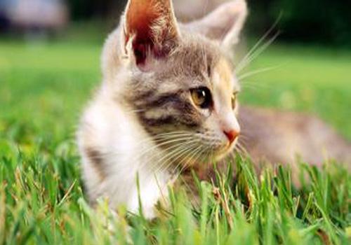 猫吐了白色粘液或泡沫图片