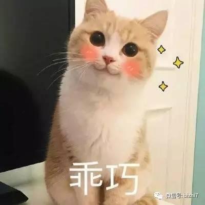 可爱猫咪表情包搞笑文字头像