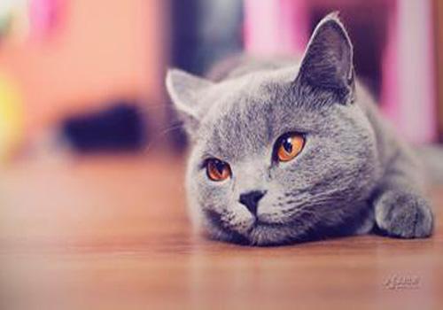 猫上吐下泻但很有精神图片