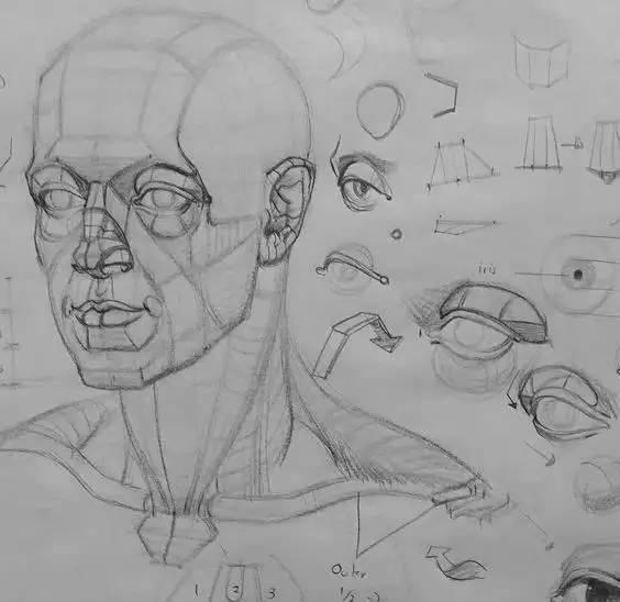 想要画好人物头像,头部结构必须过关 ▼ · 眼睛结构分析图 · 五官在
