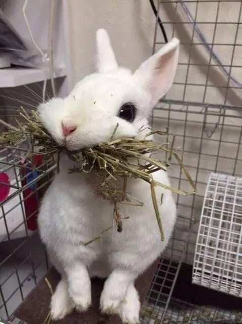 主银只是想要帮小兔子换掉笼子里的草,没想到小兔子吓坏了!