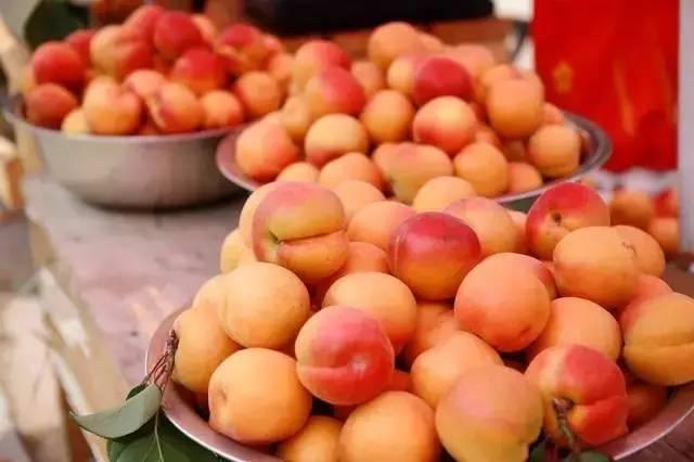 吃杏儿啦!城阳夏庄第六届少山红杏节已开幕!