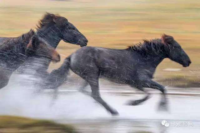 全景坝上 万马奔腾,马踏水花 摄影采风团即将封团,欲报从速图片