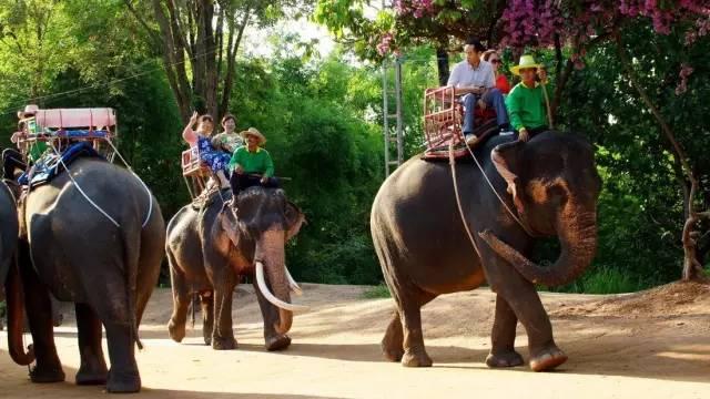 被泰国网站禁播,这就是大象旅游业背后的残酷真相…