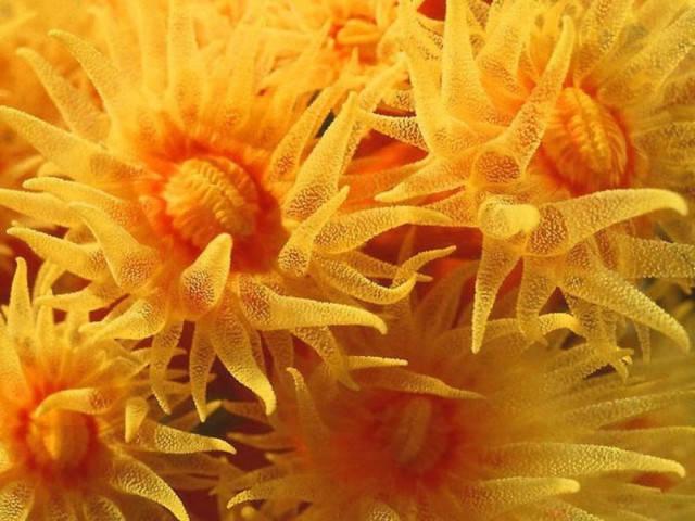 【分享】海底奇花!一辈子难得见一次,放到圈子里,大家都喜欢!