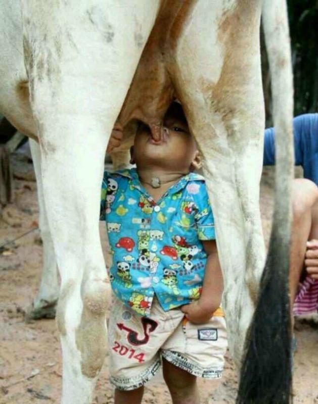 纯天然,绿色牛奶
