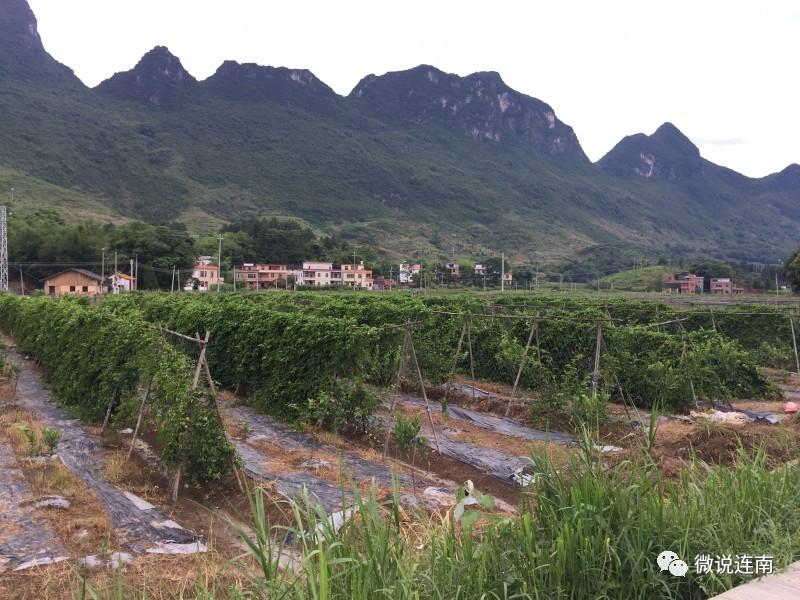 如今乡村游那么吃香,寨岗这个村会成为下一个乡村游的热门吗?