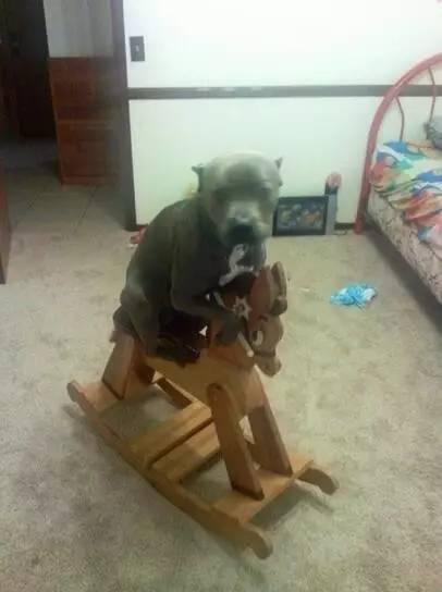 我家狗就是个谜,走进它的世界好难!