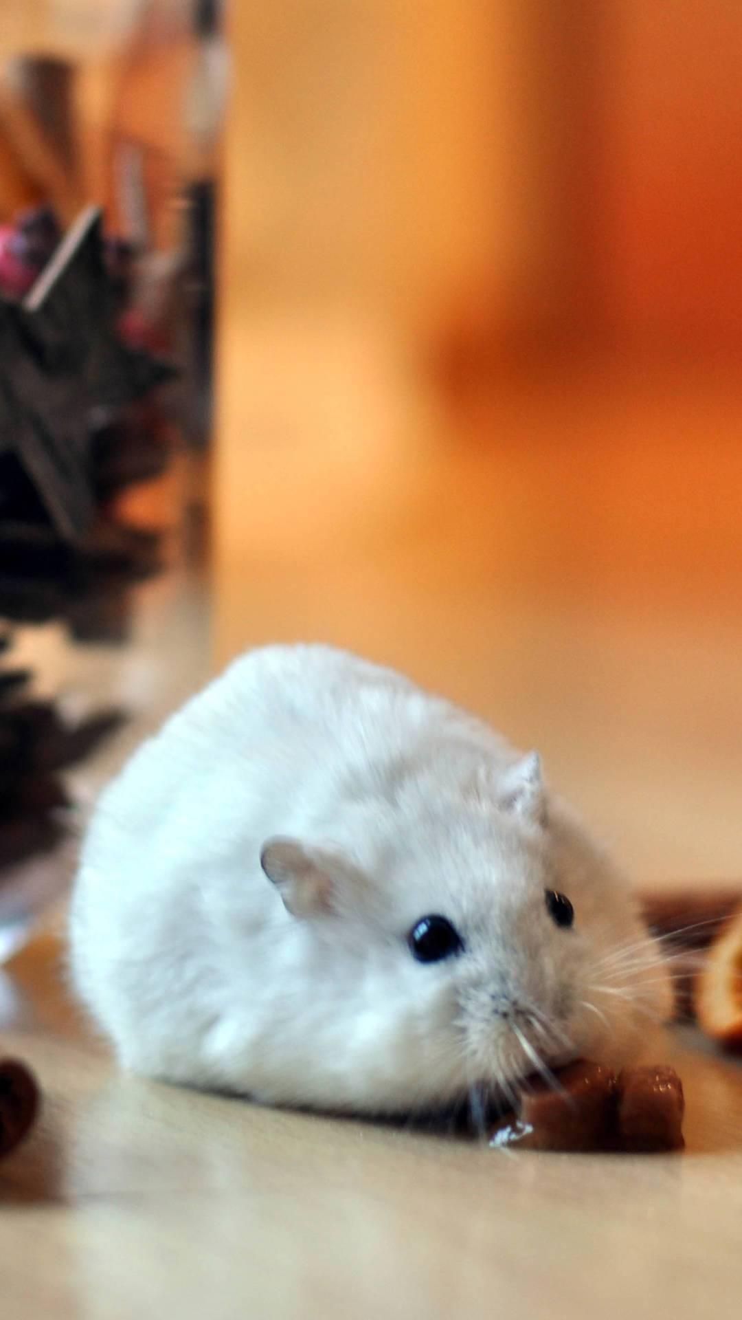 超萌可爱仓鼠 | 手机壁纸