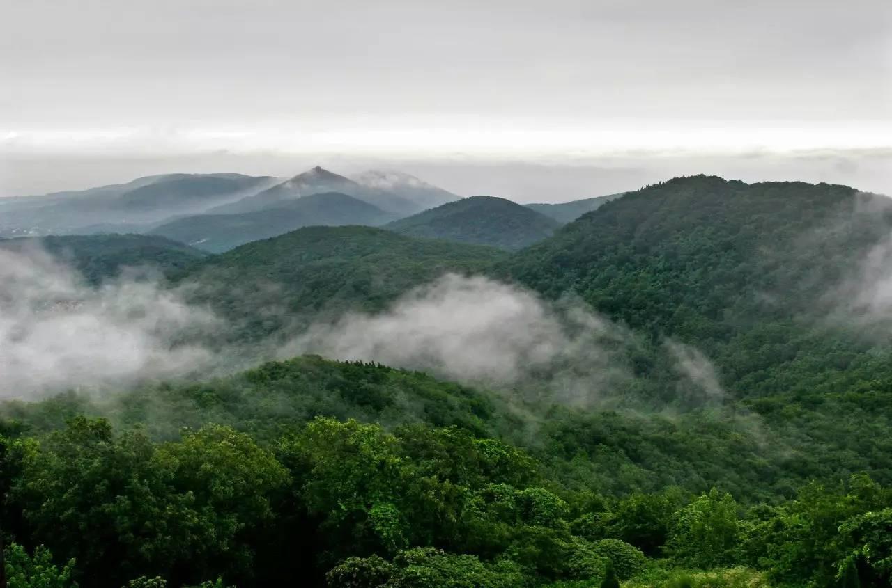 """上老山 被称作""""南京绿肺,江北明珠"""" 也是江苏境内最大的国家森林公园图片"""
