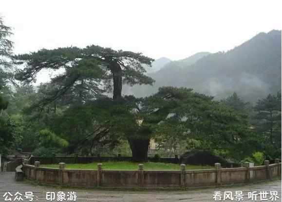 中国最古老的10颗大树,最后一棵见证了华夏之路
