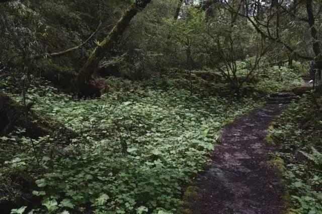 成都周边徒步 卧龙邓生沟原始森林 现实版绿野仙踪