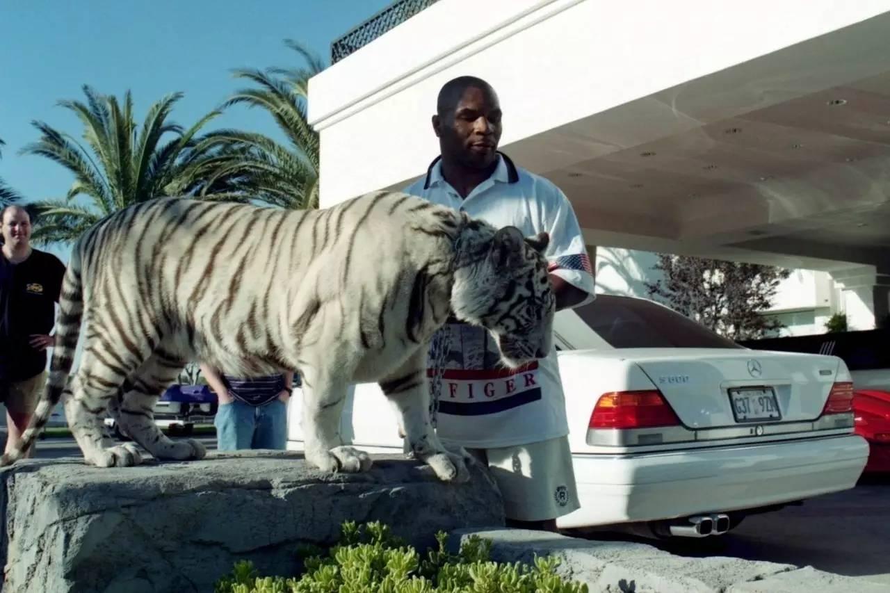 后来,他卖掉了这些老虎,其中一只卖给了一位纹身师,剩下的几只于2010图片