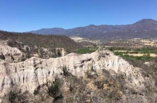 墨西哥荒野惊现稀有水獭化石