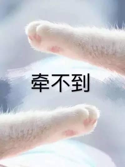 情侣牵手猫爪表情包,收好不谢!图片