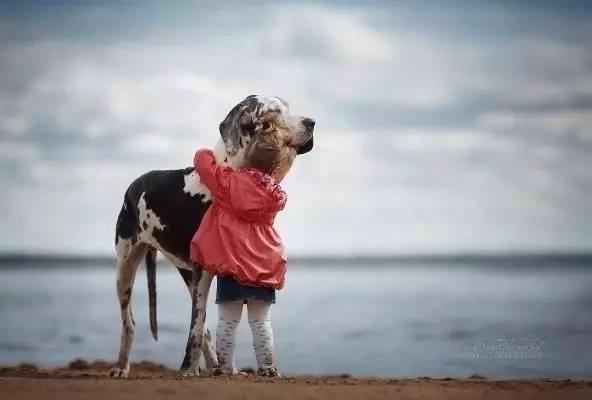 """为了给患癌的狗狗留下美好回忆,主人列了这样一份"""""""""""