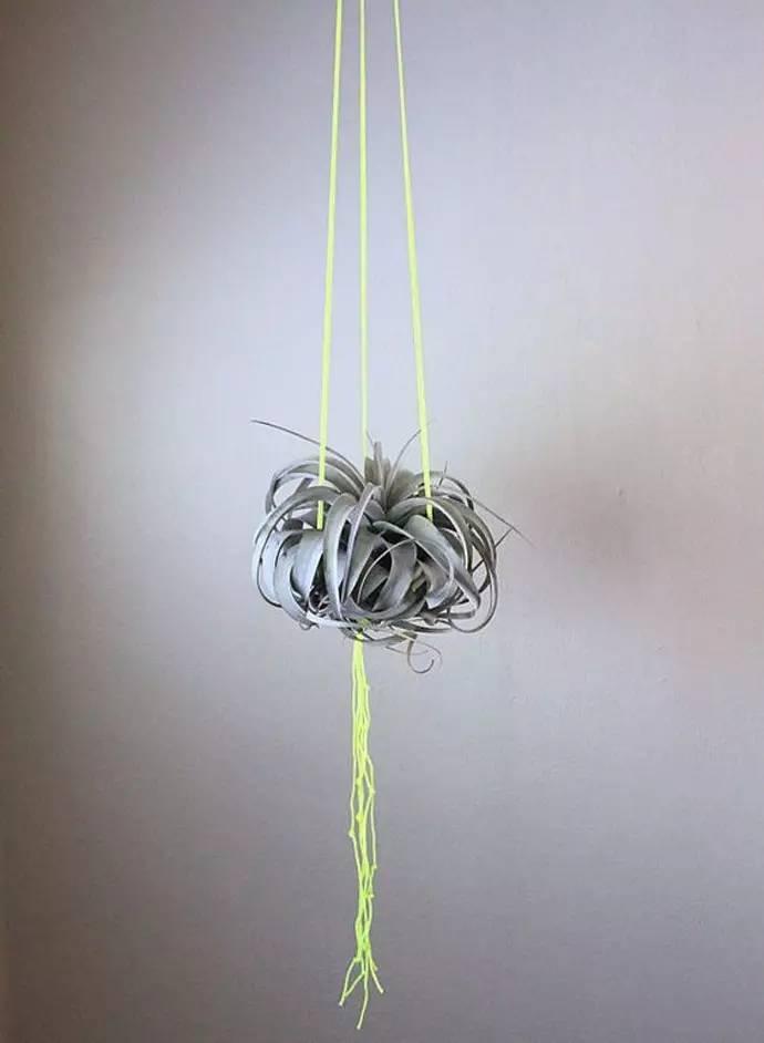 嫌绳子悬挂的没有创意,不如用铁丝给空气凤梨做一个充满设计感的秋千