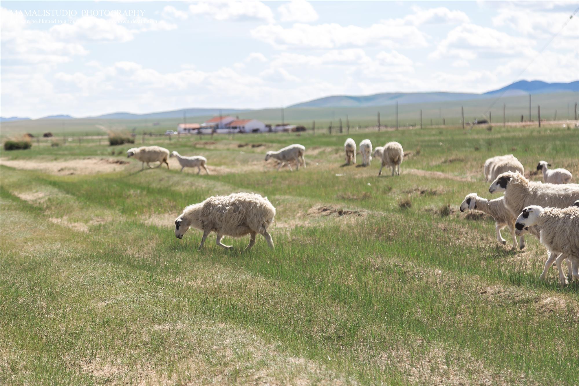 锡林郭勒盟蒙古汗城,在这里假装做一个套马的汉子
