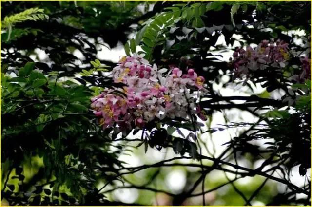 深圳居然这么美!深圳六月赏花攻略,你值得拥有!
