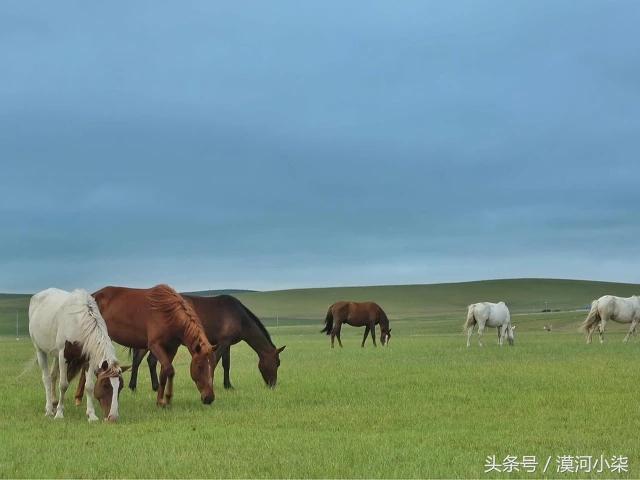 广州到呼伦贝尔草原一路向北到漠河纯玩自由行攻略