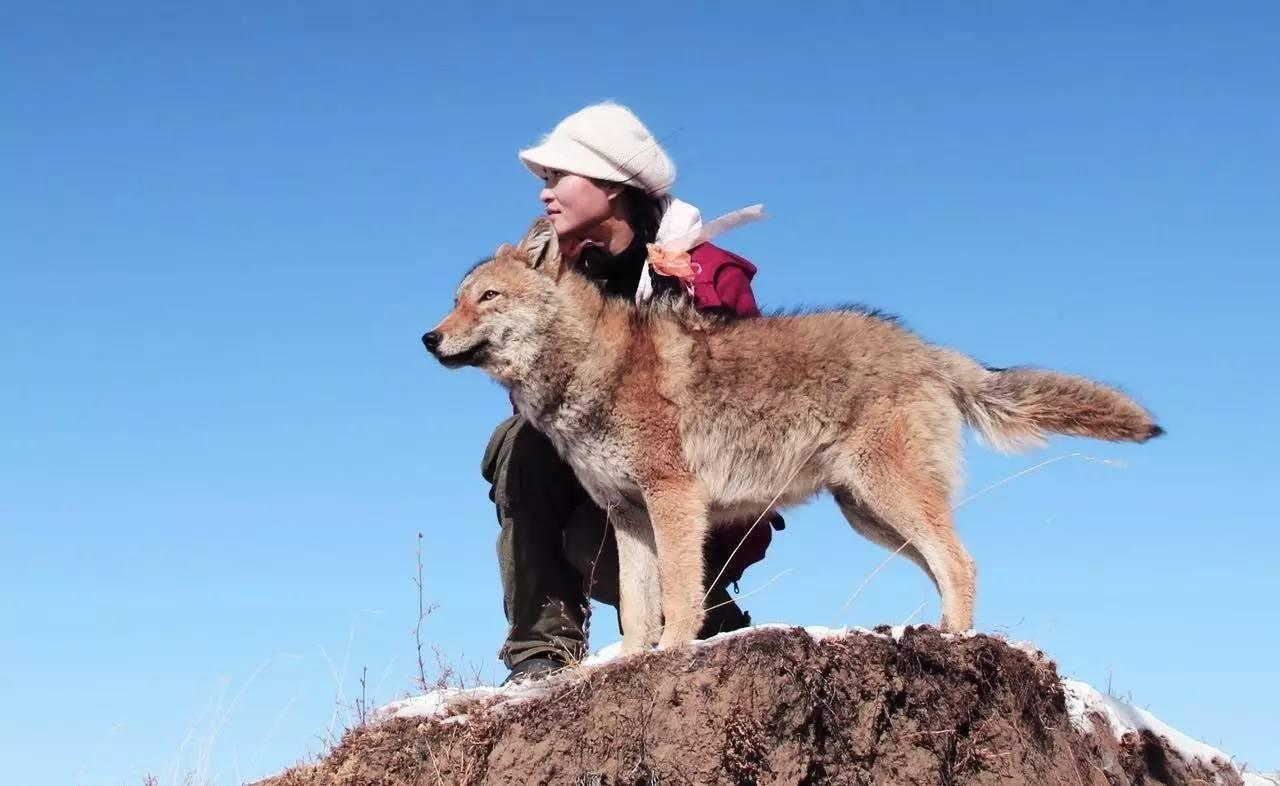 《重返·狼群》:自由比活着更重要图片