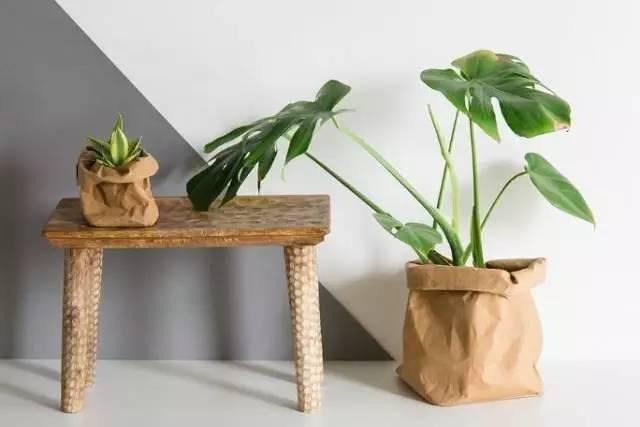盆景 盆栽 植物 600_400