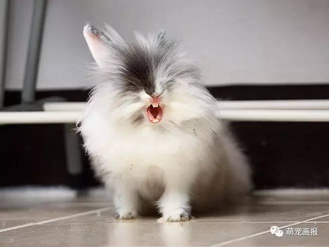 有什么比咆哮的兔子更恐怖的了,不信你瞧