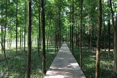 这个夏天又多两个乘凉地 武汉环城森林绿带长度全国第一图片